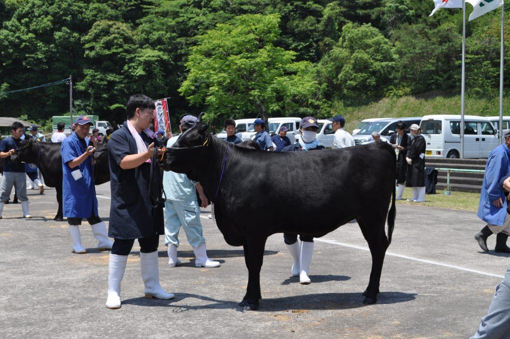 肉用牛(鹿児島黒牛)